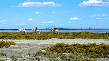 Balade en chevaux en Camargue