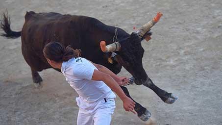 Courses de toros à Arles