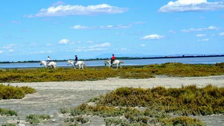 location camping activité équitation camargue