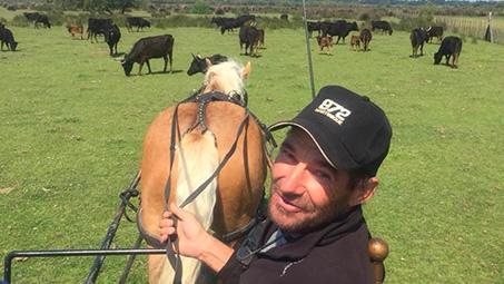 camping pour équitation en camargue
