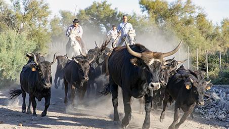 tourisme le cailar